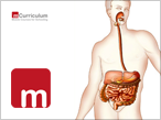 The Human Alimentary System
